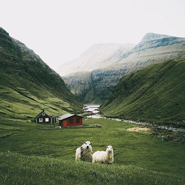 According to hannesbecker there are 57 sheep per square kilometerhellip