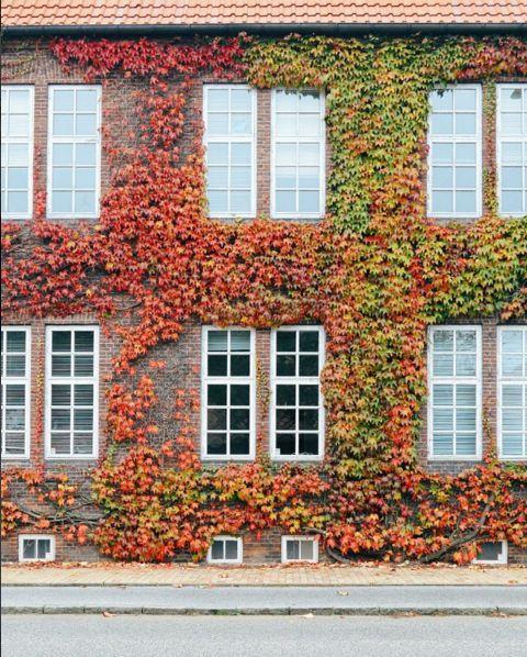 Overgrown in Denmark by ipiripinapa Travel Georama Europe World