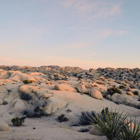 bontraveler exploring the one and only Joshua Tree National Park